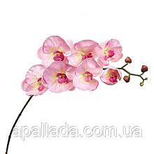 Орхідея ніжно рожева 137см