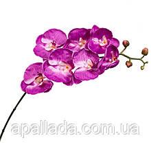 Орхідея малинова 137см