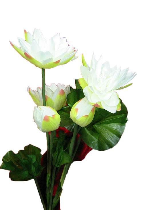 ЦВЕТЫ ЛОТОСА (1 М) 1 цветок + 2 бутона
