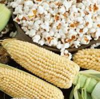 Семена Кукурузы 0,5 кг сорт Поп корн