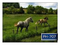 ph_707.jpg