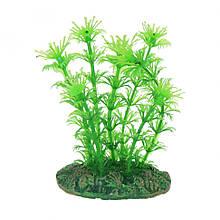 Штучна рослина Aqua Nova NP-10 08078, 10см (NP-1008078)