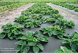 Комплект для выращивания клубники П-23 белое+П-50 черное (3,2*10), фото 3