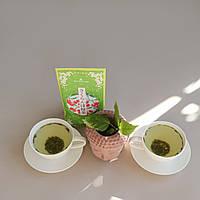 Зелений чай з вишнею