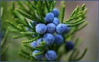 Можжевельника ягоды эфирное масло 10 мл