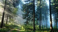 А знаете ли ВЫ, что лесной воздух является одним из мощнейших средств оздоровления человеческого организма?