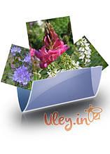 Насіння Медоносних рослин