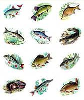 Рыба речная (свежомороженая и свежая)