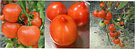 Cемена красного томата (с носиком) Риксос F1 500 шт Solare Sementi