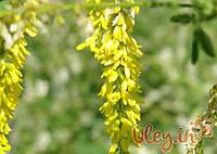 Донник желтый (буркун), 500 грамм