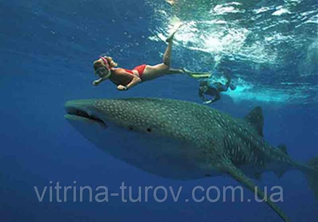 Туры в МЕКСИКУ! Плавание с китовой акулой!!! Полная экзотика!