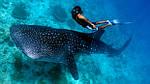 Туры в МЕКСИКУ! Плавание с китовой акулой!!! Полная экзотика!, фото 3