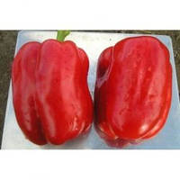 Семена перца Геркулес F1, Clause (Франция), 50 г