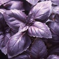 Семена базилика Блек Найт 10 гр