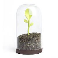 Емкость для хранения чая, кофе или специй Sprout Jar Qualy