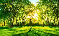 """3D фотообои """"Зелёные деревья под солнцем"""""""
