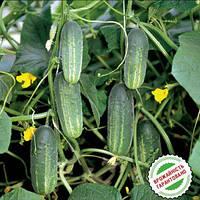 Семена огурцов Аккорд F1 10 семян Bejo Голландия, фото 1