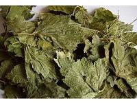Смородины лист