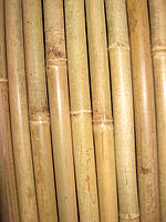 Бамбуковый  ствол (диаметр 22-25мм, дина 2,95м.)