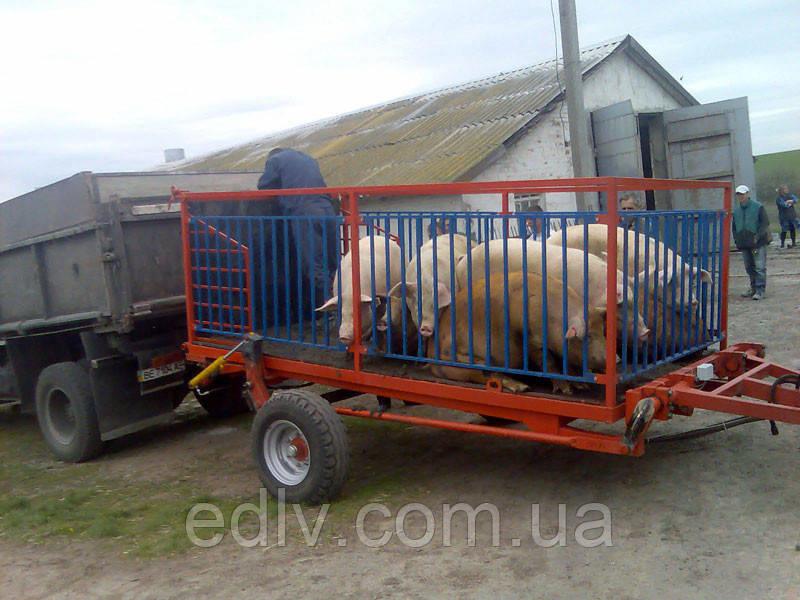 Тракторный прицеп для погрузки животных ТС-3 для тракторов МТЗ-82, грузоподъемность 2т