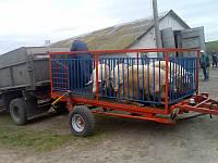 Тракторний причіп для вантаження тварин МС-3 для тракторів МТЗ-82, вантажопідйомність 2т, фото 1