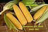 Семена кукурузы Монсанто ДКС 3420