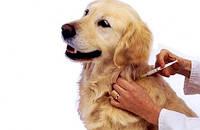 Вакцинация собак, кошек и пушных зверей
