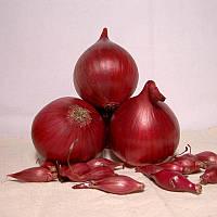 Лук севок озимый Ред Барон 0,5 кг Broer B.V