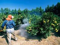 Фунгициды (препараты для борьбы с грибковыми болезнями растений)