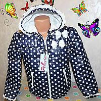 Весенняя курточка на девочку  ''Бантики'' синяя в белый горох 32,34,36,38