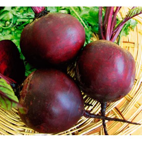Свекла Ред бул семена сорта темно-красного цвета и округлой формы