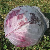 РЭД ДИНАСТИ F1 - семена капусты краснокачанной ранней, 2500 семян , Semenis, фото 1