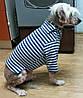 Тельняжка для собаки