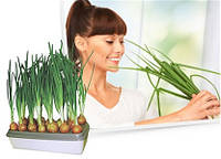Установка для выращивания зеленого лука-Чудо рост, фото 1
