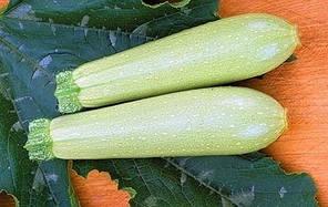 Семена кабачка Искандер F1, 1 шт, Seminis (Семинис), Голландия