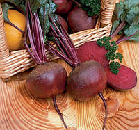 Семена свекла столовая Нобол 10 г. Обработанный Clause Франция
