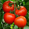 АЛЕКСИЯ F1 - семена томата индетерминатного , Semenis