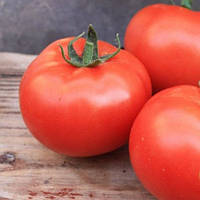 ХИЛАРИО F1 - семена томата индетерминатного, Semenis, фото 1