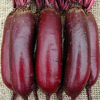 КАРИЛОН - семена свеклы, Rijk Zwaan