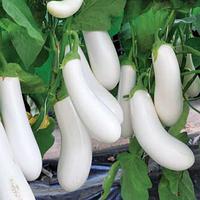 АРЕТУЗА F1 - семена баклажана, Rijk Zwaan 100 семян
