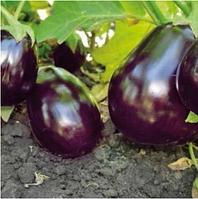 ШЕРІЛ F1 - насіння баклажана, Rijk Zwaan 100 насінин