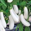 АРЕТУЗА F1 - семена баклажана, 1 000 семян, Rijk Zwaan