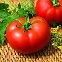 МЕЛОДИЯ F1 - семена томата индетерминатного, 500 семян, Semenis, фото 1