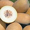 ДЕЛАНО F1 - семена дыни тип Ананас, 1 000 семян, Bayer