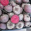 БЕБИБИТ - насіння буряка столового PR, 25 000 насінин, Rijk Zwaan