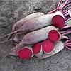 ЛОМА - семена свеклы столовой, 25 000 семян, Rijk Zwaan