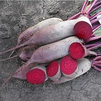 ЛОМА - семена свеклы столовой, 25 000 семян, Rijk Zwaan, фото 1