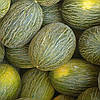 РЕЙМИЛ F1 - семена дыни тип Пиел де Сапо, 1 000 семян, Rijk Zwaan
