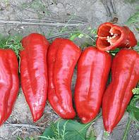 КОРИНА F1 - семена перца сладкого, 1 000 семян, Rijk Zwaan, фото 1