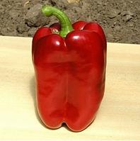 ТРИРОСО F1 - семена перца сладкого, 1 000 семян, Rijk Zwaan, фото 1